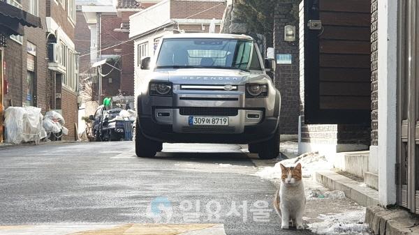 골목길에 세워 둔 디펜더를 촬영하는데 동네 고양이가 포즈를 취했다. [이창환 기자]